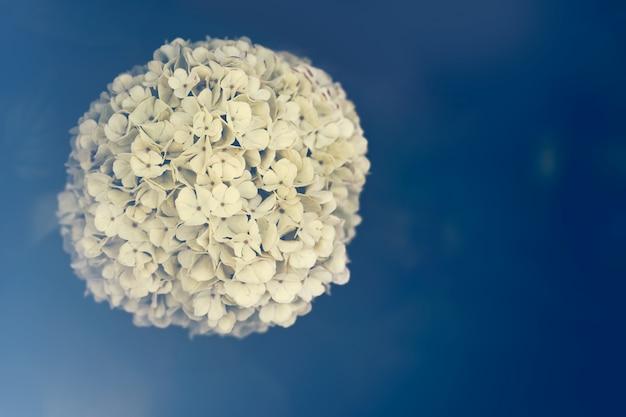 青色の背景にある花のボール 無料写真