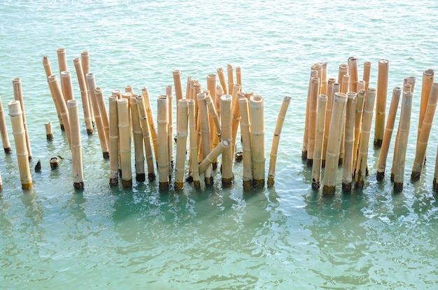 Bamboo breakwater. bamboo pole using for break sea wave Premium Photo