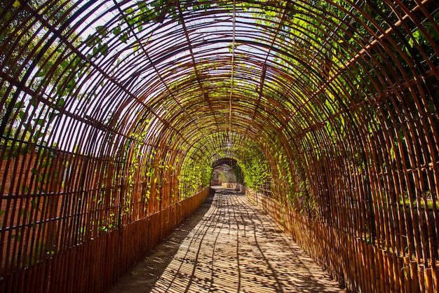 Bamboo curve wood tunnel in a park Premium Photo