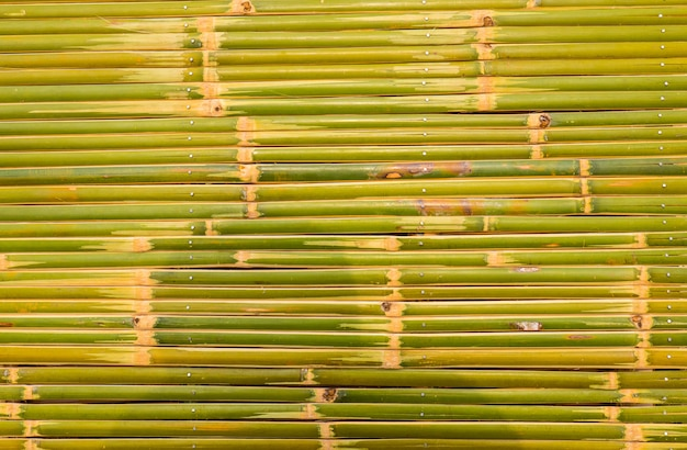 Bamboo fence background and texture Premium Photo