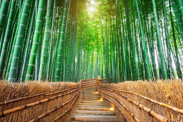 Бамбуковый лес в киото, япония. Бесплатные Фотографии