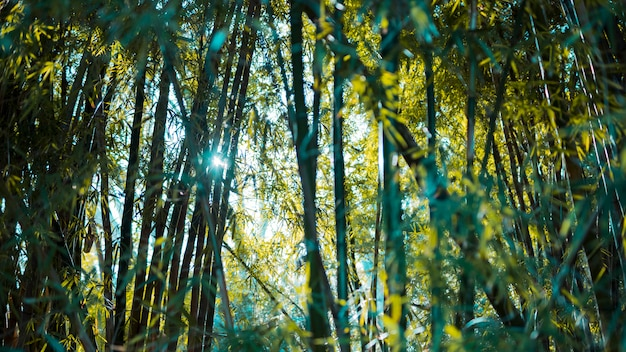 Bamboo forest landscape Free Photo