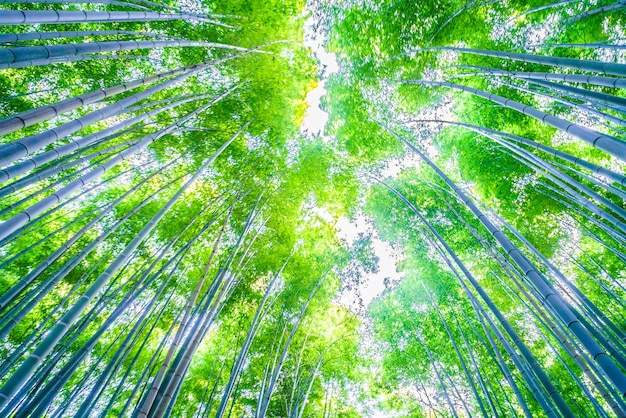 Bamboo forest Free Photo