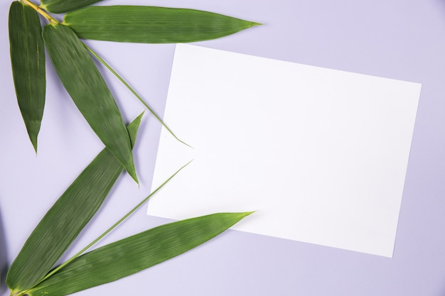 Bamboo leaf with blank white card Free Photo