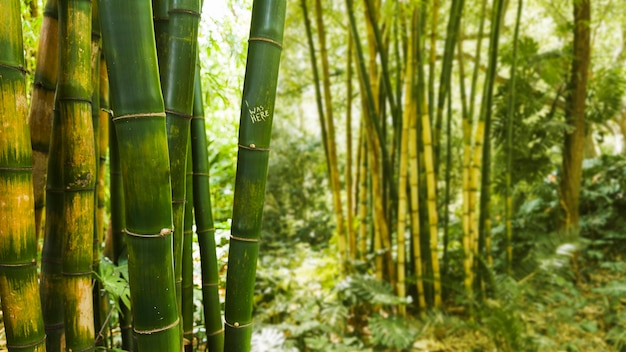 Bamboo in rainforest Free Photo