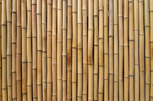 Bamboo Texture Photo Free Download