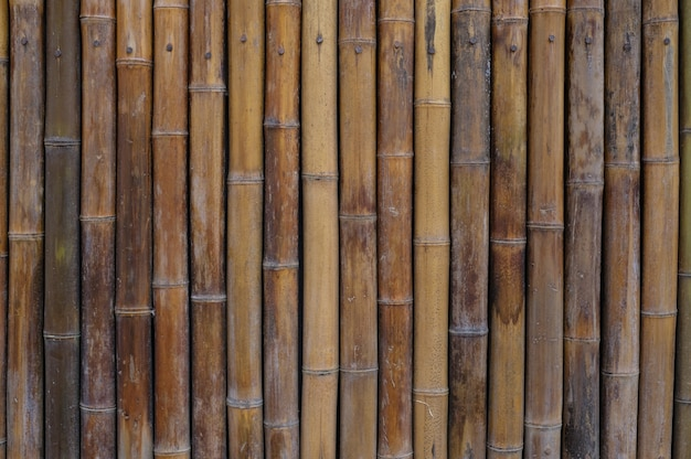 Bamboo wall house Free Photo
