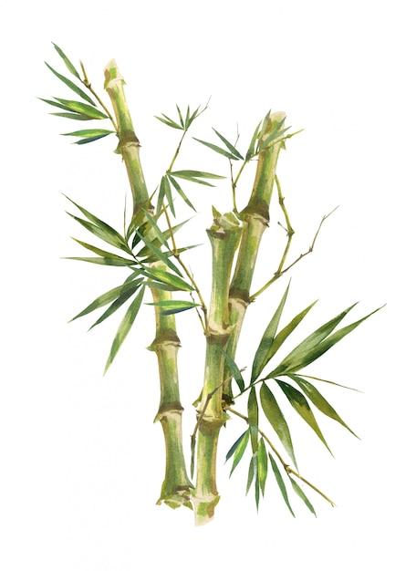 白い背景の上のbambooの葉の水彩イラスト絵画 Premium写真