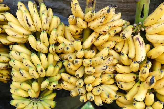 Банановый сорт Premium Фотографии