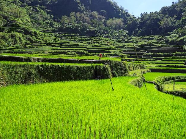 Рисовые террасы в bangaan, филиппины Premium Фотографии