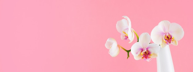 Banner with white phalaenopsis in the glass vase on pink Premium Photo