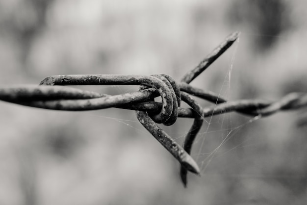 Barbed wire Premium Photo