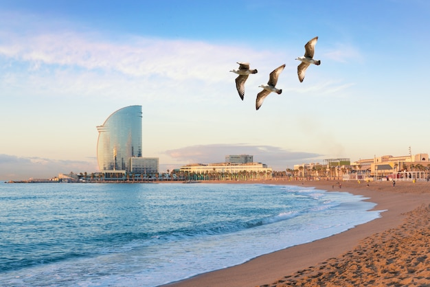 Barceloneta beach in barcelona with colorful sky at sunrise. seafront, beach,coast in spain. Premium Photo