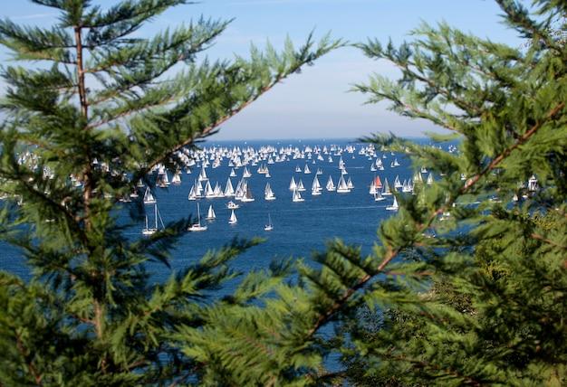 Barcolana, the trieste regatta Premium Photo