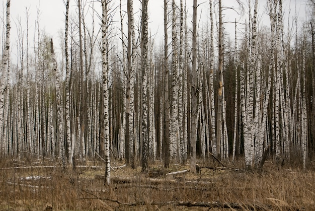 Bare forest Free Photo