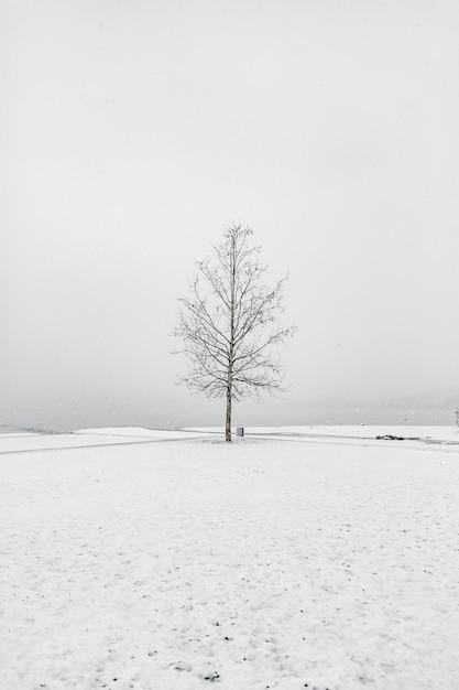 Голое дерево в снежной местности под чистым небом Бесплатные Фотографии
