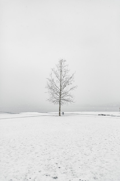 Bare tree in a snowy area under the clear sky Free Photo