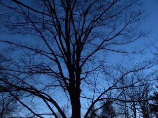 bare trees  night, branches