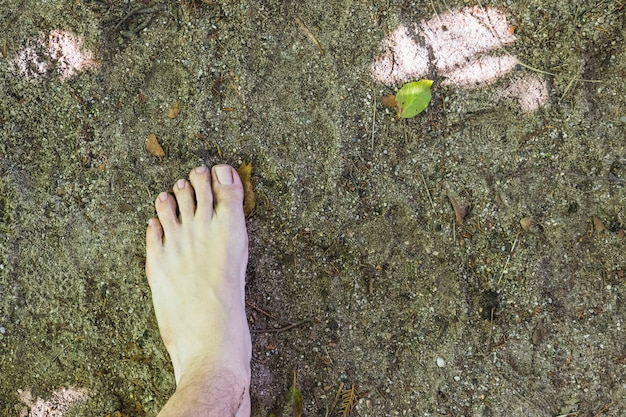 A barefoot aerial view on surface in the forest Premium Photo