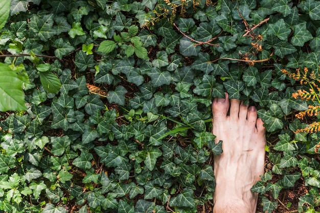 A barefoot aerial view on surface of green leaves in the forest Premium Photo