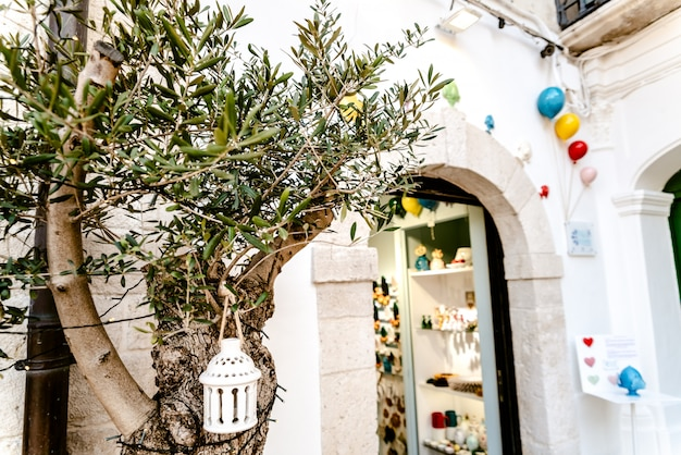 Bari, italy - march 8, 2019: olive tree at the door of an italian craft trade with colorful balloons hanging Premium Photo