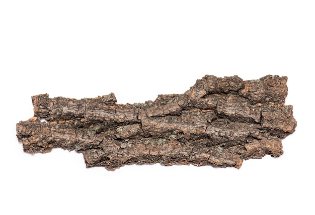 Bark or crust of dry old tree isolated on white background Premium Photo