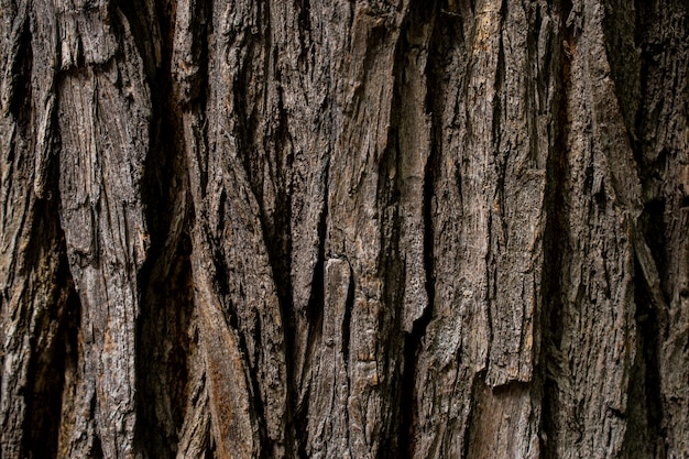 The bark of an old tree is covered with moss. the texture surface of brown wood. Premium Photo