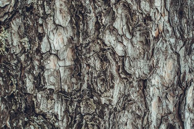 Bark of pine - background Premium Photo