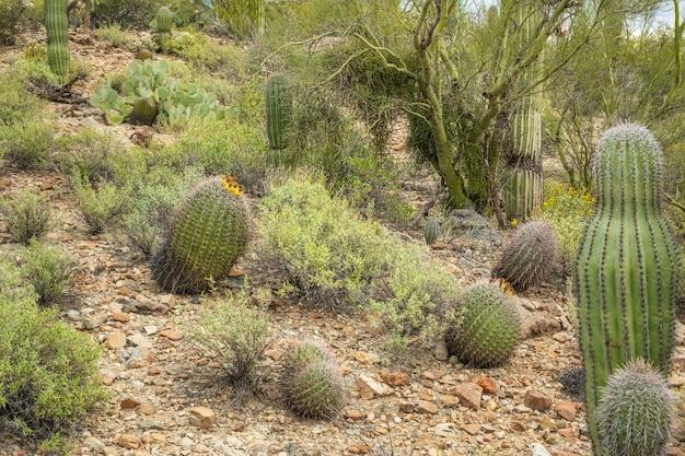 Barrel cactus Free Photo