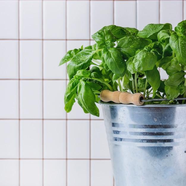 Basil in pot Premium Photo