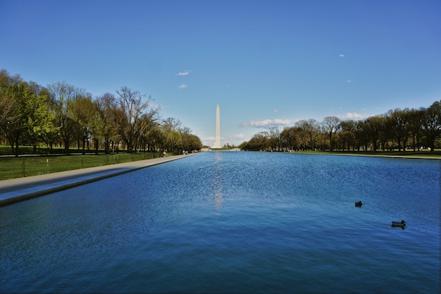 米国ワシントンdcのオベリスクとリンカーン記念館の間の盆地。午後は晴れていて、アヒルが水の中を泳いでいた Premium写真