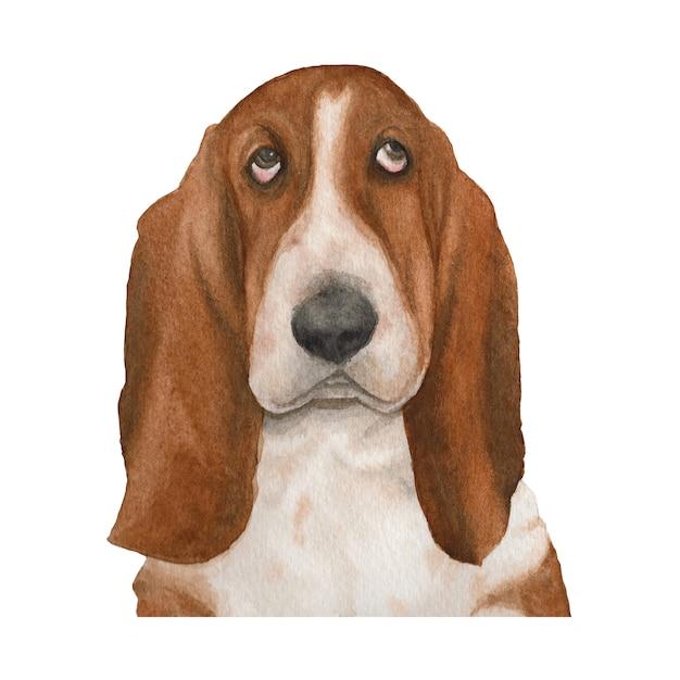 Basset hound dog watercolor illustration Premium Photo