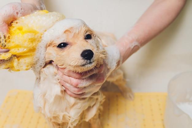 banho em filhote de cachorro