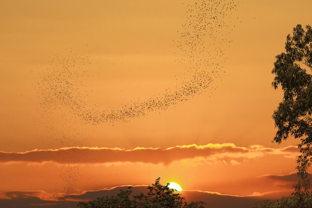 Bats flying against sun and golden sky may use for horrible theme or halloween theme Premium Photo
