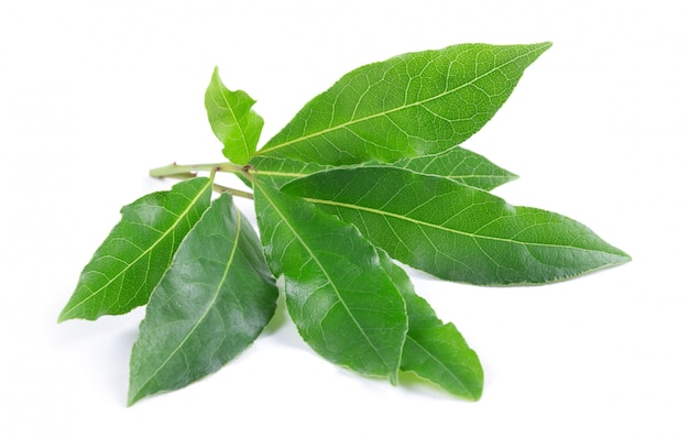 Bay leaves on white Premium Photo
