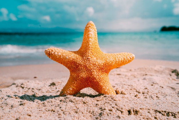 ヒトデとビーチの背景 無料写真
