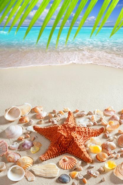 Beach sand starfish caribbean tropical sea Premium Photo