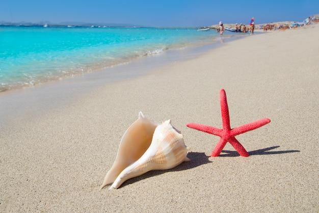 Beach starfish and seashell on white sand Premium Photo