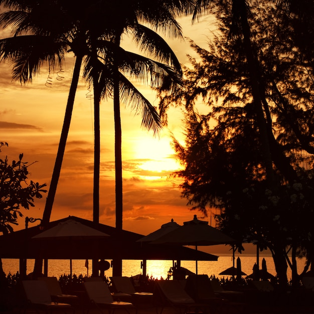 Beach sunset at the coast line, palm tree Premium Photo