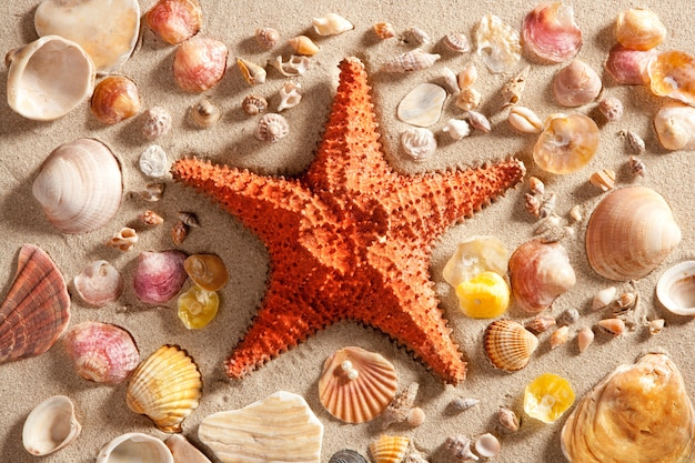 Beach white sand starfish many clam shells summer Premium Photo