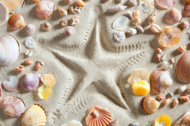 Beach white sand starfish print many clam shells Premium Photo