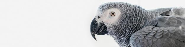 かわいい鳥をかわいがるひげを生やした男 無料写真