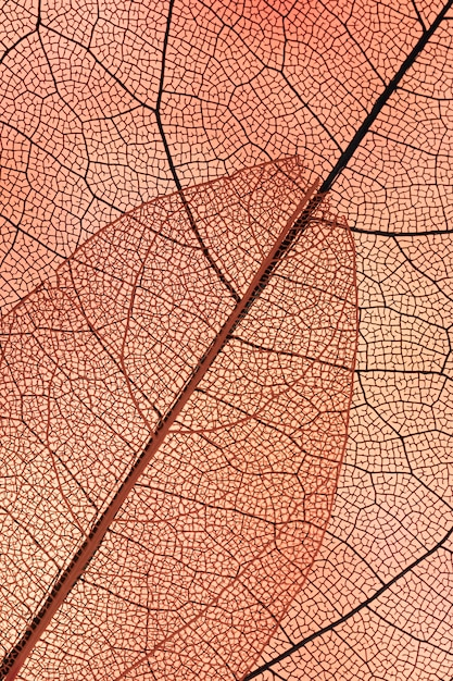 Beautiful abstract autumn leaves Free Photo