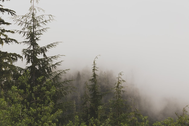 Beautiful aerial shot of a foggy forest Free Photo
