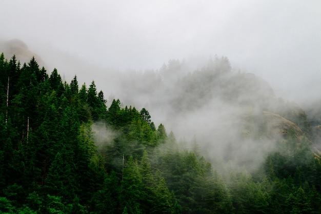 Bello colpo aereo di una foresta avvolta in nebbia e nebbia terrificanti Foto Gratuite