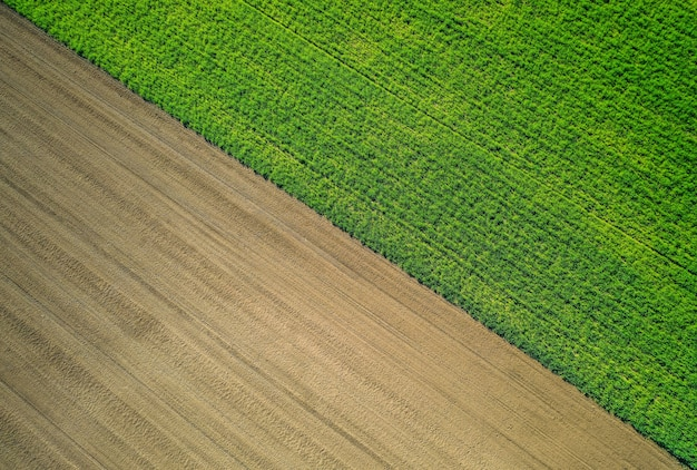 Beautiful aerial shot of a green agricultural field Free Photo