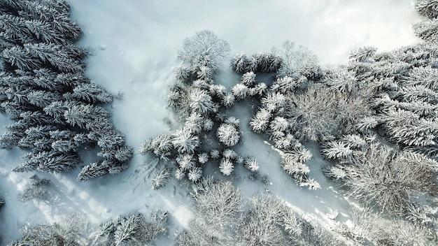 Bella vista aerea di una foresta con alberi coperti di neve durante l'inverno Foto Gratuite