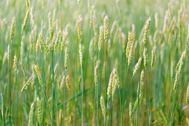 Beautiful agricultural landscape Premium Photo