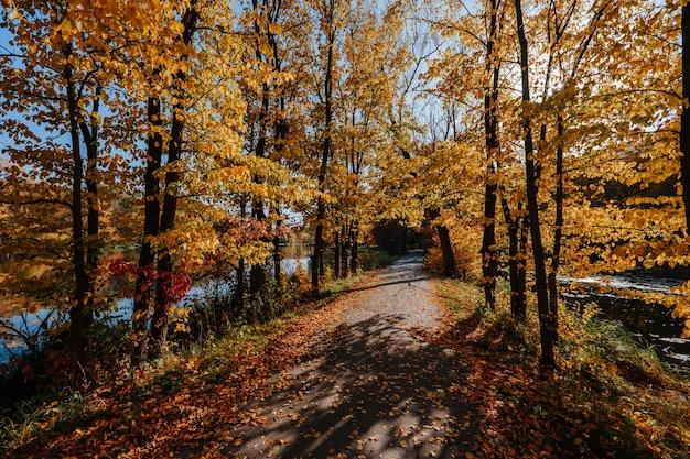 Красивая аллея в осеннем парке с разноцветными деревьями Premium Фотографии