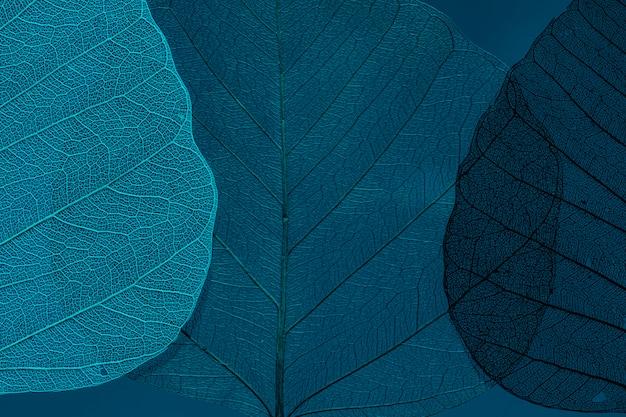 美しく詳細なマクロの葉 無料写真